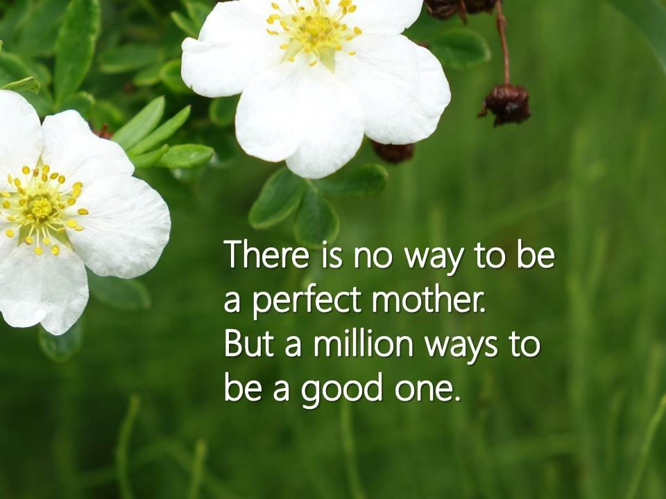 no way to be a perfect mother white flower